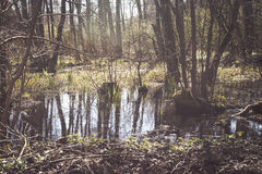 Swamp. In the forest and water plants Stock Image