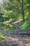 Swamp in the forest. The swamp in the woods and broken branches Royalty Free Stock Photography