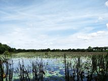 Swamp. Glade thailand Stock Images