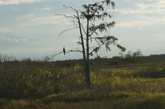 Swamp grass and the bayou stock photography