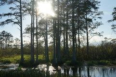 Swamp grass and the bayou royalty free stock image