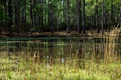 Swamp grass field with lake and trees Stock Photo
