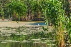 Swamp grass seagull bird Royalty Free Stock Image
