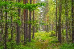 Swamp green rich forest Stock Images