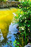 Swamp and greens stock photos