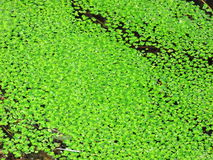 Swamp Royalty Free Stock Photography