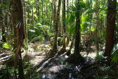 Swamp on Hinchinbrook Island. Hinchinbrook Island in north Queensland, Australia, is a haven for bushwalkers. The Thorsborne Track is a 32km trail through Stock Photos