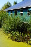Swamp house. A green house surrounded by a swamp on a summer day Royalty Free Stock Images