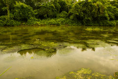 Swamp. An image of swamp on east surabaya Stock Images