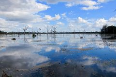 Swamp Jayatataka Angkor, Cambodia Royalty Free Stock Images