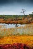 Swamp Kakerdaja in Estonia Stock Images