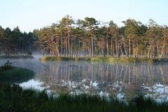 Swamp lake Royalty Free Stock Images