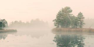 Swamp lake Stock Image