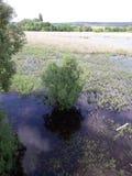 Swamp lake Royaltyfri Fotografi
