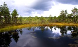 Swamp lake at cloudy day and trees Royalty Free Stock Photo