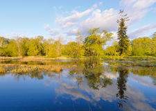 Swamp lake and green forest Royalty Free Stock Image