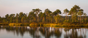 Swamp lake Royalty Free Stock Images