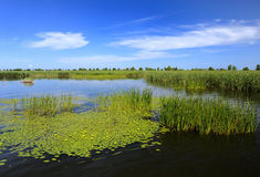 Swamp,lake, reeds, blue sky Stock Photo