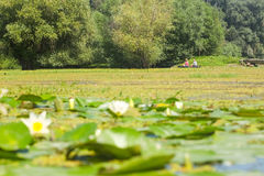 Swamp lake with water lilies and fishing boat Royalty Free Stock Images