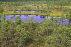 Swamp lakes Royalty Free Stock Photos