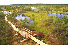Swamp lakes Stock Photo