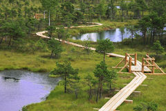Swamp lakes Royalty Free Stock Image