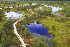 Swamp lakes Royalty Free Stock Images