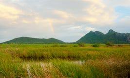 Free Swamp Land Stock Image - 21188811
