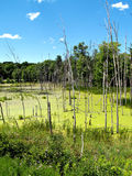 Swamp Land. A small swamp at the side of the road in Pennsylvania Stock Photos