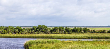 Swamp land at Apalachicola with reed grass Stock Photography