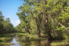 Swamp land Royalty Free Stock Photos