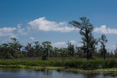 Swamp land Royalty Free Stock Photography