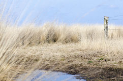 Swamp land in winter Stock Images
