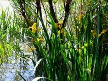 Swamp landscape Stock Images