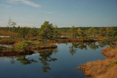 Swamp landscape, bog forest with standing water Stock Photo