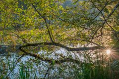 Swamp landscape at dawn. Sun shine through trees Royalty Free Stock Images