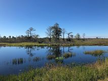 swamp landscape Florida stock image
