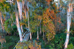 Swamp Landscape Florida stock photo