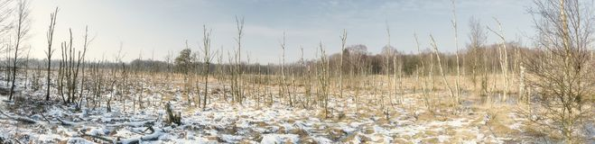 Swamp Landscape in Germany in Winter. Swamp Landscape Dosenmoor in Germany in Winter Royalty Free Stock Photography