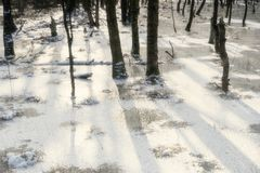 Swamp Landscape in Germany in Winter. Swamp Landscape Dosenmoor in Germany in Winter Stock Images
