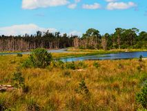Swamp landscape stock photography
