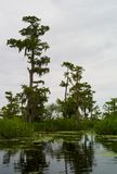 Swamp Landscape with Trees, Louisiana royalty free stock images