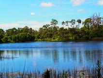 Swamp landscape Royalty Free Stock Images