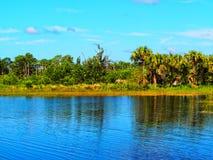 Swamp landscape Stock Photography