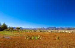 Swamp. Lashihai lake, Yunnan Province, China Royalty Free Stock Image