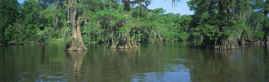 Swamp, Louisiana Stock Images
