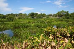 Green Cay Wetlands Stock Photography