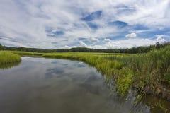 Swamp Marsh Summer Stock Image