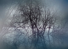 Swamp in mist. Trees in swamp area on misty evening royalty free stock photos