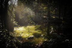 Swamp. Without a swamp monster, most likely stock photos
